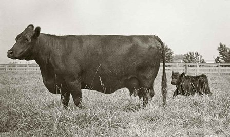 Cow and Baby by Ed Goldstein art print