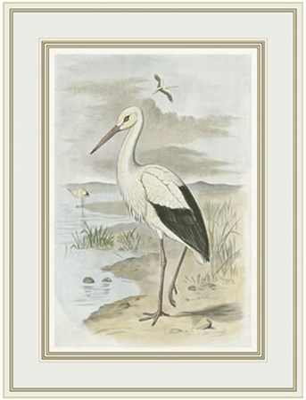 White Stork by F.W. Frohawk art print