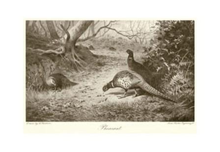Pheasant by Archibald Thorburn art print