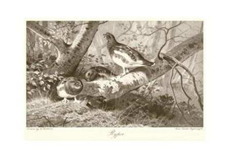 Ryper by Archibald Thorburn art print