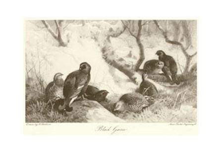 Black Game by Archibald Thorburn art print
