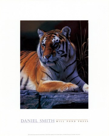 Bengal Tiger by Daniel Smith art print