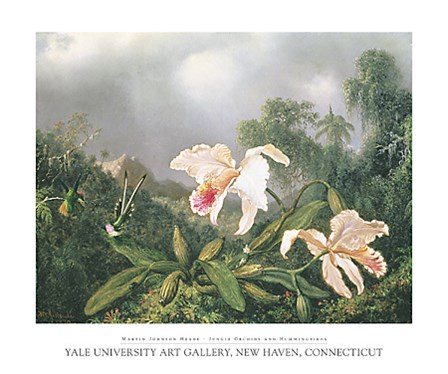 Jungle Orchids and Hummingbirds by Martin Johnson Heade art print