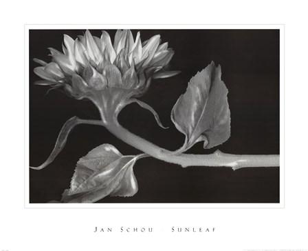 Sunleaf by Peter Johan Schou art print