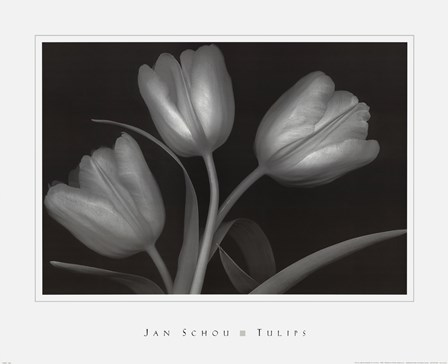Tulips by Peter Johan Schou art print