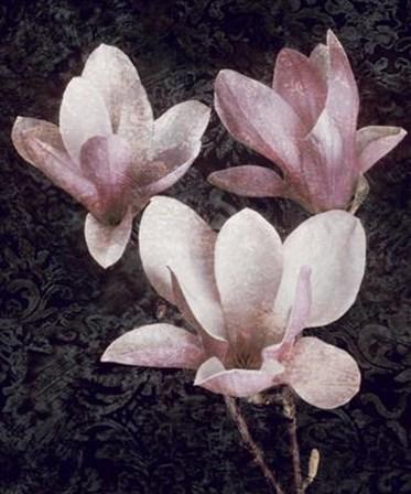 Pink Magnolias II by John Seba art print