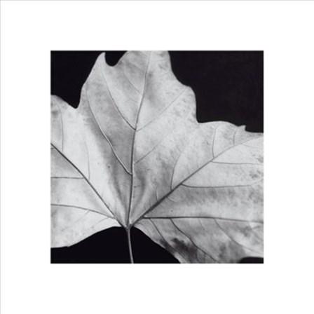 Leaf by Brian Davi Stevens art print