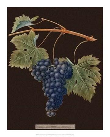 Purple Grapes by George Brookshaw art print