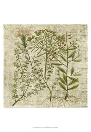 Garden Verses I by Vision Studio art print