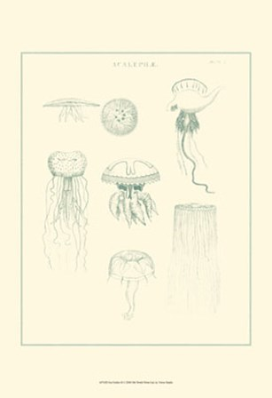 Sea Nettles II by Vision Studio art print