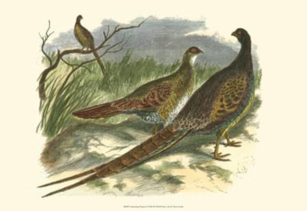 Semmering Pheasant by Vision Studio art print