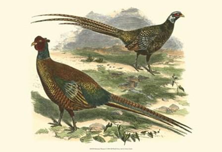 Bohemian Pheasant by Vision Studio art print