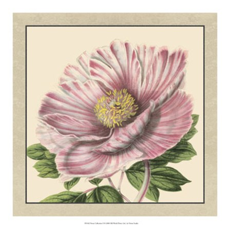 Peony Collection II by Vision Studio art print