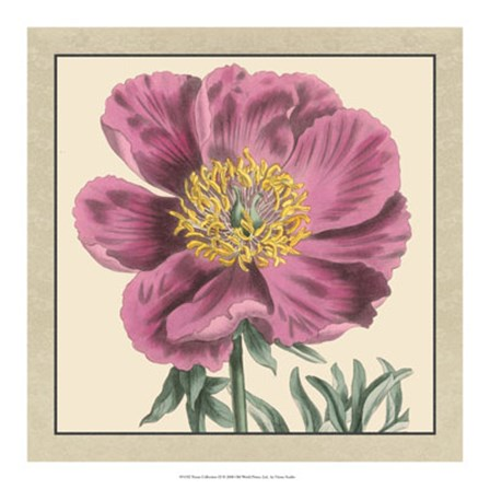 Peony Collection III by Vision Studio art print