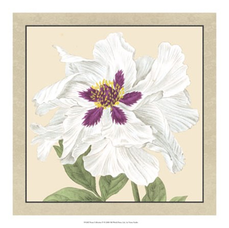 Peony Collection IV by Vision Studio art print
