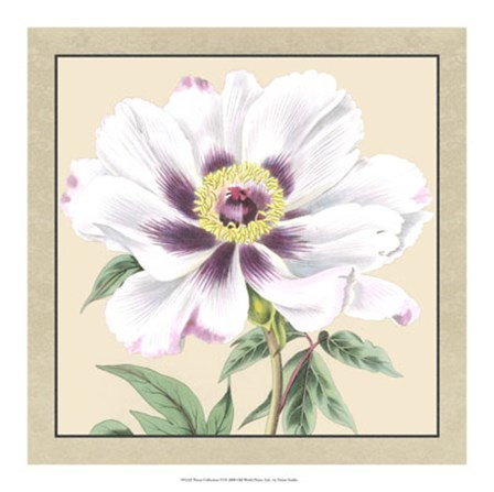 Peony Collection VI by Vision Studio art print