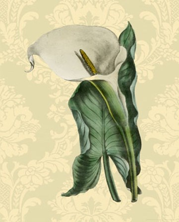 Calla with background (A) by Apogee Services art print