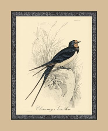Printed Chimney Swallow (A) by Apogee Services art print