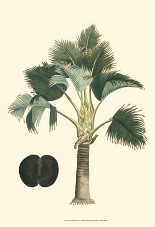 Exotic Palms III by Vision Studio art print