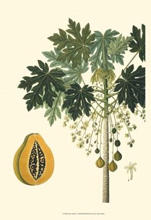 Exotic Palms V by Vision Studio art print