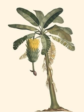 Exotic Palms VI by Vision Studio art print