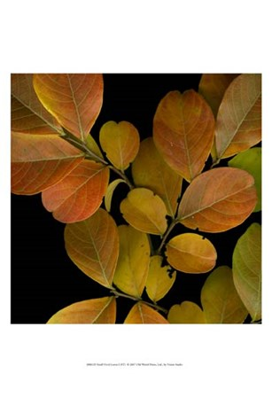 Small Vivid Leaves I by Vision Studio art print