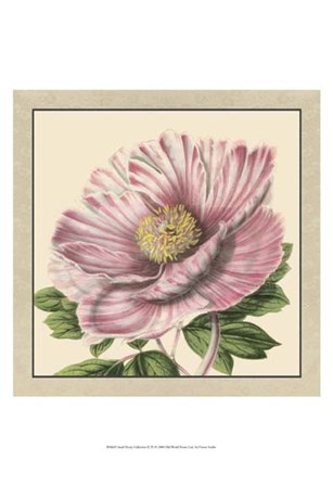 Small Peony Collection II (P) by Vision Studio art print