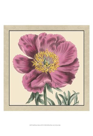Small Peony Collection III (P) by Vision Studio art print