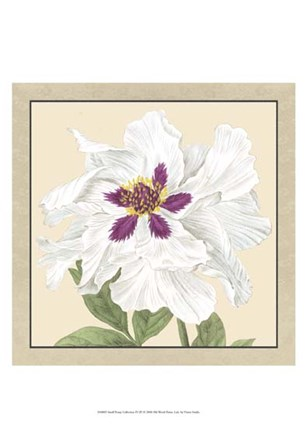 Small Peony Collection IV (P) by Vision Studio art print