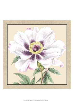 Small Peony Collection VI (P) by Vision Studio art print