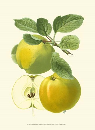 Antique Green Apple by Vision Studio art print