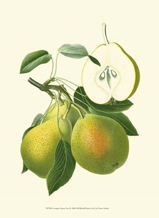 Antique Green Pear by Vision Studio art print