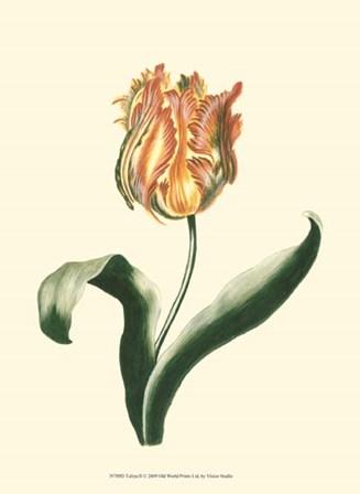 Tulipa II by Vision Studio art print