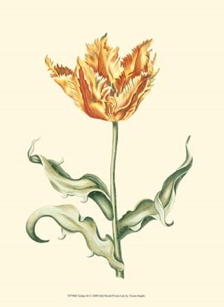 Tulipa III by Vision Studio art print