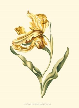 Tulipa IV by Vision Studio art print