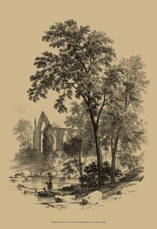 The Ash Tree art print