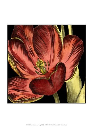 Mini Transitional Tulip III by Vision Studio art print