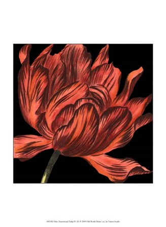 Mini Transitional Tulip IV by Vision Studio art print