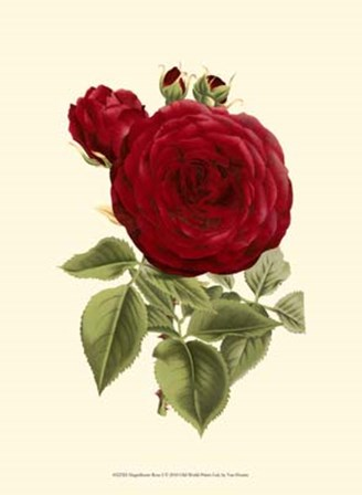 Magnificent Rose I by Francois Van Houtte art print