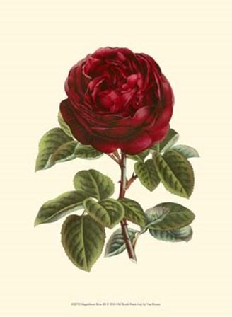Magnificent Rose III by Francois Van Houtte art print
