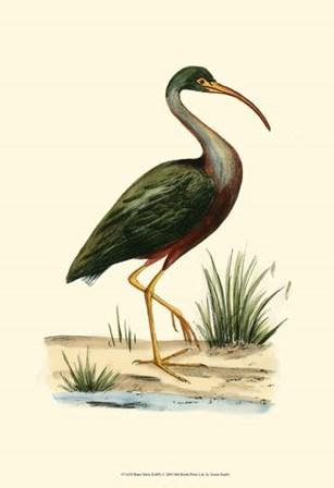 Water Birds II by Vision Studio art print