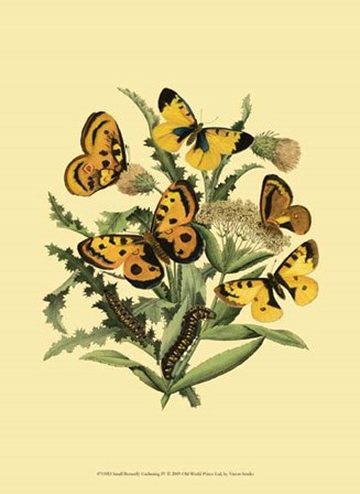 Small Butterfly Gathering IV by Vision Studio art print