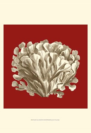 Small Coral on Red III (P) by Vision Studio art print