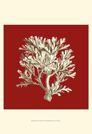 Small Coral on Red IV (P) by Vision Studio art print