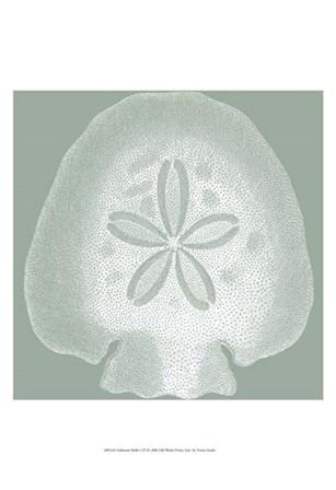 Seabreeze Shells I (P) by Vision Studio art print