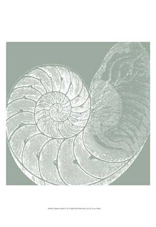 Seabreeze Shells IV (P) by Vision Studio art print