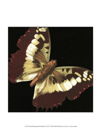 Small Dramatic Butterflies IV by Vision Studio art print