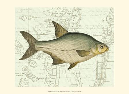 Freshwater I by Vision Studio art print