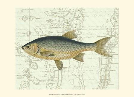 Freshwater II by Vision Studio art print