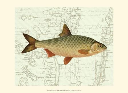 Freshwater III by Vision Studio art print